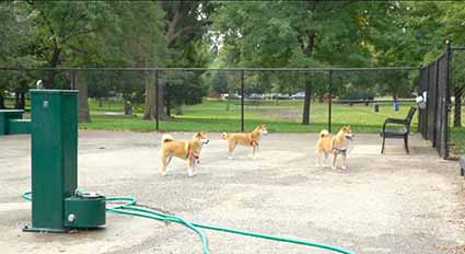 River Park Dog Friendly Area