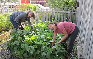 Carlson Community Garden